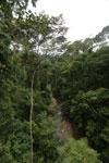 Rainforest creek -- sabah_2603