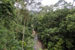 Rainforest creek -- sabah_2604