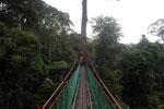 Danum Valley canopy walkway -- sabah_2606