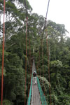 Danum Valley canopy walkway -- sabah_2617