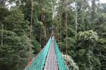 Danum Valley canopy walkway -- sabah_2619