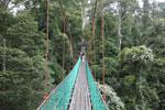 Danum Valley canopy walkway -- sabah_2621