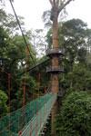 Danum Valley canopy walkway -- sabah_2623