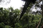 Danum Valley canopy walkway -- sabah_2634