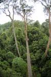 Danum Valley canopy walkway -- sabah_2635