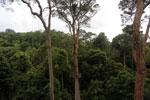 Danum Valley canopy walkway -- sabah_2639