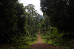 Road from Danum Valley