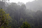Danum Valley rainforest -- sabah_2655