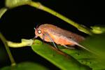 Moth -- sabah_2695