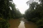 Danum River -- sabah_2749