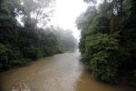 Danum River -- sabah_2750