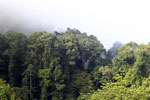 Danum Valley rainforest -- sabah_2763