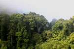 Danum Valley rainforest -- sabah_2765