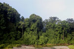 Danum Valley rainforest -- sabah_2767