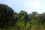 Danum Valley rainforest -- sabah_2768