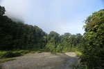 Danum Valley rainforest -- sabah_2772