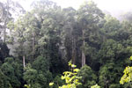 Danum Valley rainforest -- sabah_2778