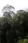 Danum Valley rainforest -- sabah_2785