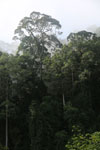 Danum Valley rainforest -- sabah_2786