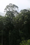 Danum Valley rainforest -- sabah_2787