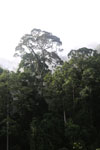 Danum Valley rainforest -- sabah_2788