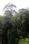 Danum Valley rainforest -- sabah_2789