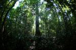 Borneo rainforest -- sabah_2811
