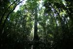 Borneo rainforest -- sabah_2812