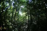 Borneo rainforest -- sabah_2813
