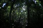 Borneo rainforest -- sabah_2814