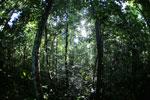 Borneo rainforest -- sabah_2815