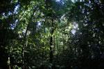 Borneo rainforest -- sabah_2816