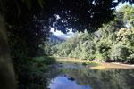 Danum river -- sabah_2817