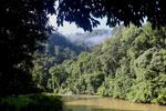 Danum river -- sabah_2818