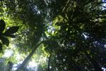 Borneo rainforest -- sabah_2822