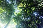 Borneo rainforest -- sabah_2823
