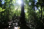 Borneo rainforest -- sabah_2838