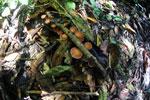 Fungi -- sabah_2847