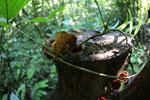Fungi -- sabah_2848