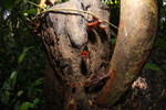 Fungi -- sabah_2850