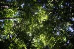 Borneo rainforest -- sabah_2852
