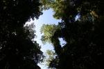 Borneo rainforest -- sabah_2854