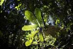 Borneo rainforest -- sabah_2860