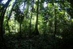 Borneo rainforest -- sabah_2861