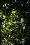 Borneo rainforest -- sabah_2862