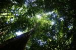 Borneo rainforest -- sabah_2864