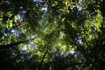 Borneo rainforest -- sabah_2881