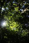 Borneo rainforest -- sabah_2882