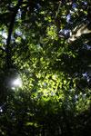 Borneo rainforest -- sabah_2883