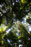 Borneo rainforest -- sabah_2888